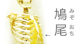 「みぞおち」なぜ漢字で鳩尾と書くのか